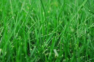 Cuidado del césped de hierba muerta