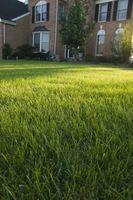 ¿Crecerá la hierba encima de piedra caliza triturada?