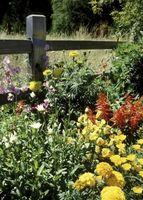 Cómo seleccionar y sembrar Flores perennes