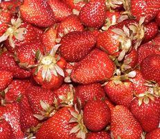 Abonos para plantas de fresa