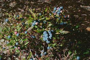 ¿Cómo deshacerse de arbustos silvestres y setos