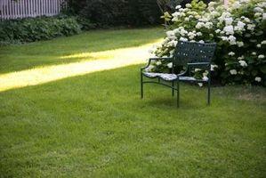 Maneras naturales para eliminar los topos de la yarda