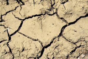 ¿Cómo añadir bacterias a mi suelo?