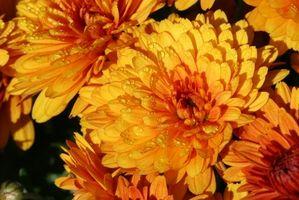 Cómo hacer arreglos florales de otoño