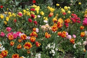 Consejos para las flores de jardín
