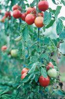 5 consejos de jardín de vegetales para una cosecha abundante