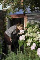 Ideas de jardinería barato