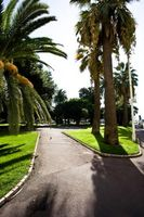 Reglamento de Florida sobre recorte de árbol de Palma