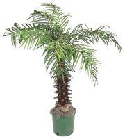 Palm Tree comedor decoración