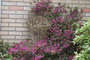Ideas para plantar flores y arbustos