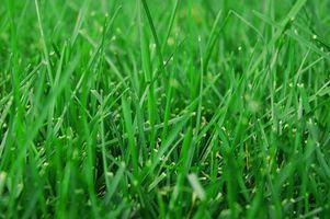 Cortacésped para Bermuda Grass