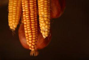 Cómo polinizar maiz a mano