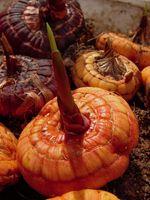 ¿Qué propagadas vegetativamente quiere decir?