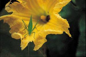 ¿Cambiará el sabor de los vegetales el pesticida líquido detergente?