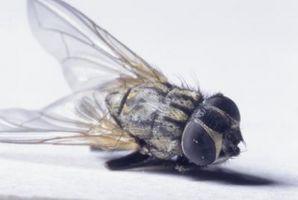 ¿Por qué hay moscas en mi porche?