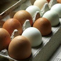 Cómo reciclar papel cartones de huevo