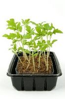 Primeras plantas de jardín