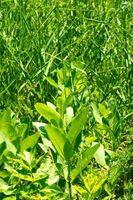 Cómo podar las malas hierbas