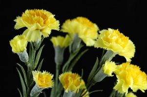 Instrucciones para arreglos florales artificiales