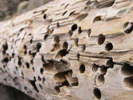 Cómo matar a las termitas en leña