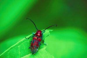 Cómo hacer repelente Natural para las plagas del jardín