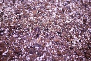 Remedio casero para Circular parches marrones en hierba en Texas