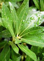 ¿Por qué es importante de NaOH en la fotosíntesis?