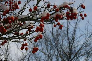 Ideas para decorar tu terraza en invierno