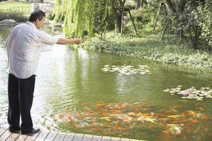 ¿Cómo puedo corregir PH alto niveles de estanque de peces?
