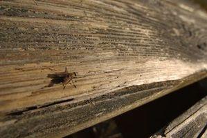 Casera mosca y Mosquito repelente para caballos