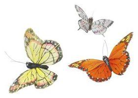 Las mariposas nativas de Virginia