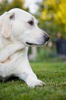 ¿Cómo puedo dejar mi perro de matar a mi césped?
