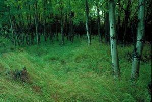 Cinco hechos en ecosistemas terrestres