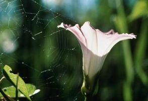 ¿Cómo deshacerse de telas de araña en las plantas