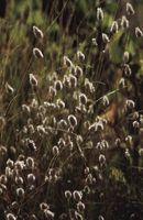 Sobre plantas nativas