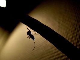 Cómo evaluar una trampa de Mosquito de Hampton de Rush