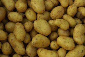 Cómo combatir Erwinia en una patata