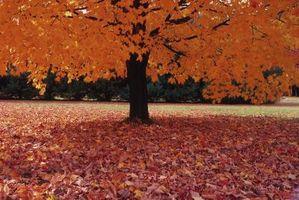Modificación de suelos con hojas