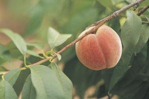 Insectos y la cada vez mayor de Peaches