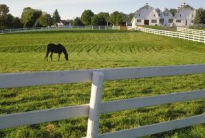 ¿Cuando es el mejor momento para fertilizar plantas de Tall Fescue en Kentucky?