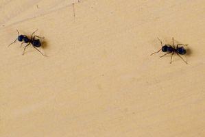 ¿Qué Spray alrededor del exterior de una casa para deshacerse de las hormigas?