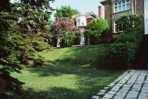 ¿Cómo reparar pozos en el patio trasero