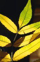 ¿Tiene pH Up o pH abajo de trabajo para las plantas del envase?