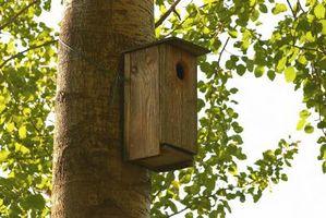 Cómo colgar un cuadro de pájaro en un árbol de abedul
