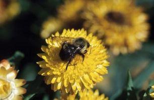 Cómo hacer una casa de Bumblebee