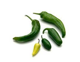 No crecen mis plantas de Chile Jalapeño