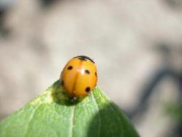 Cómo controlar insectos en plantas vegetales