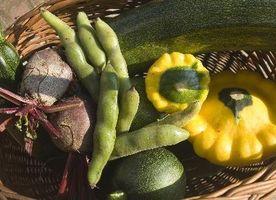 ¿Cuándo puedo plantar verduras de mi huerto?