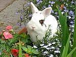 Cómo mantener a los conejos fuera de parterres