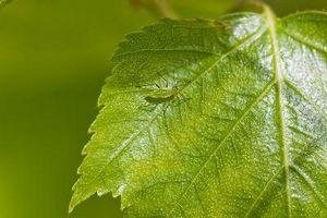 Productos de Control de plagas de jardín no tóxico